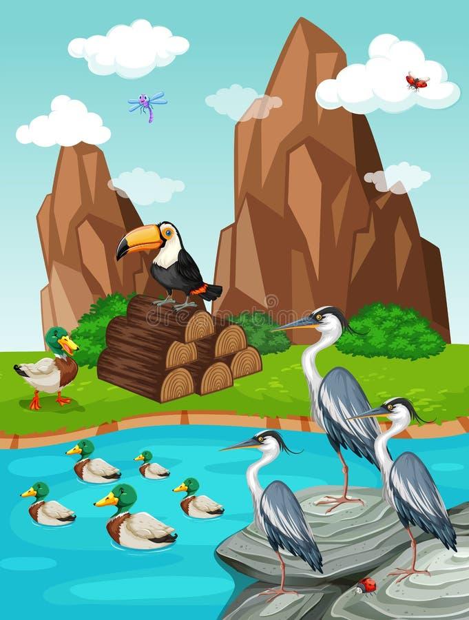 Pássaros e patos pela lagoa ilustração do vetor