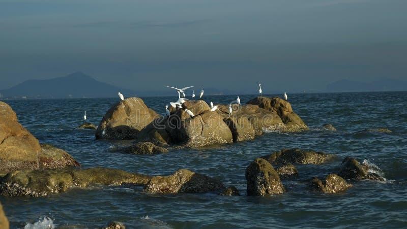 Pássaros e pedras de mar fotografia de stock