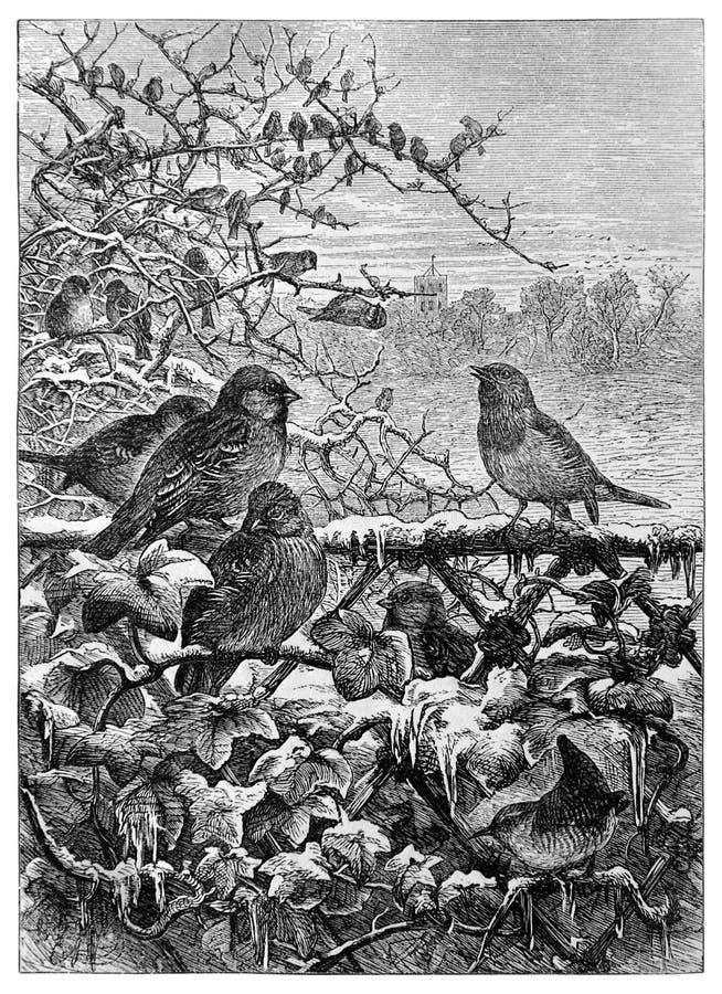 Pássaros em arbustos no inverno ilustração royalty free
