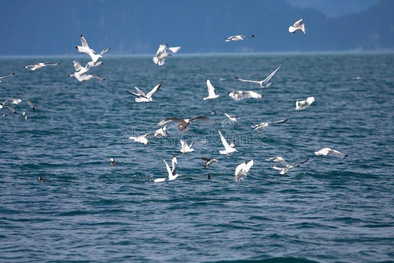 Pássaros em torno de uma baleia fotografia de stock