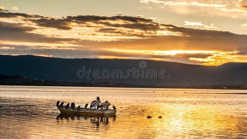 Pássaros em um bote durante o por do sol bonito imagens de stock royalty free