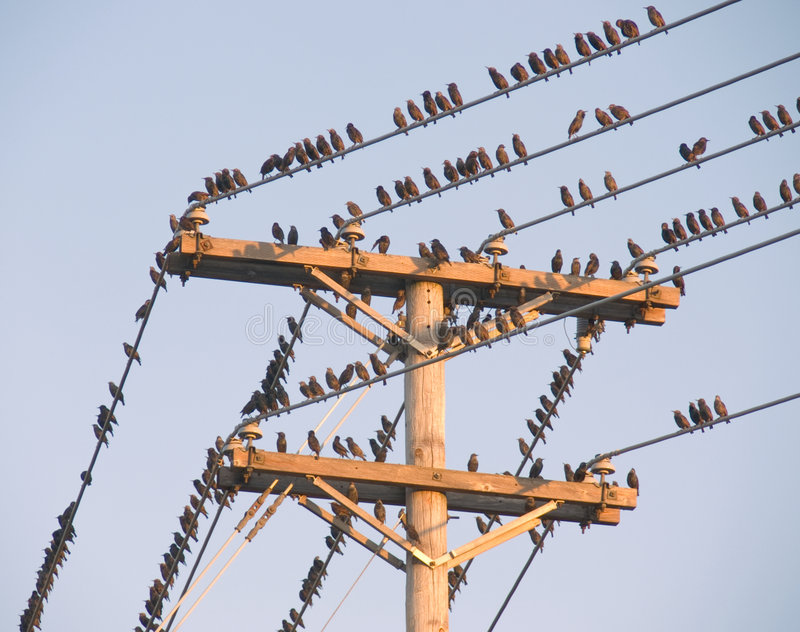 Pássaros em um fio imagem de stock royalty free