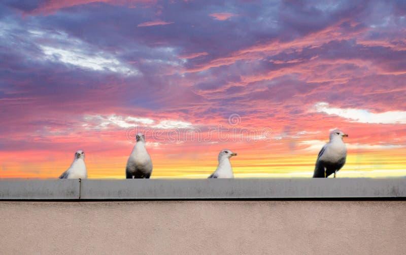 Pássaros em um telhado fotos de stock