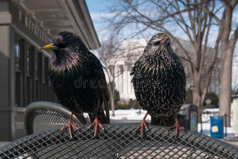 Pássaros em uma cadeira imagem de stock