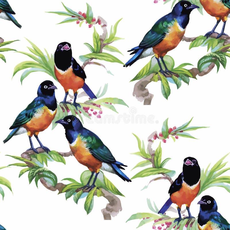 Pássaros exóticos selvagens da aquarela no teste padrão sem emenda das flores no fundo branco ilustração do vetor