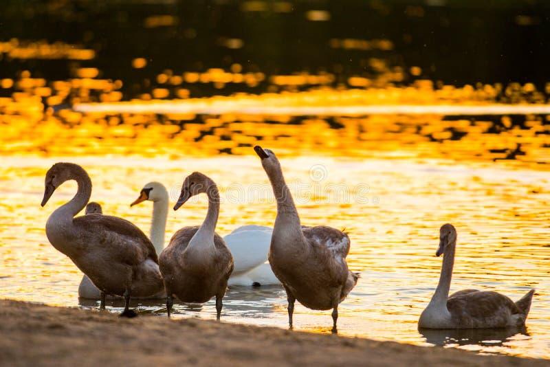Pássaros grandes nos animais selvagens imagens de stock