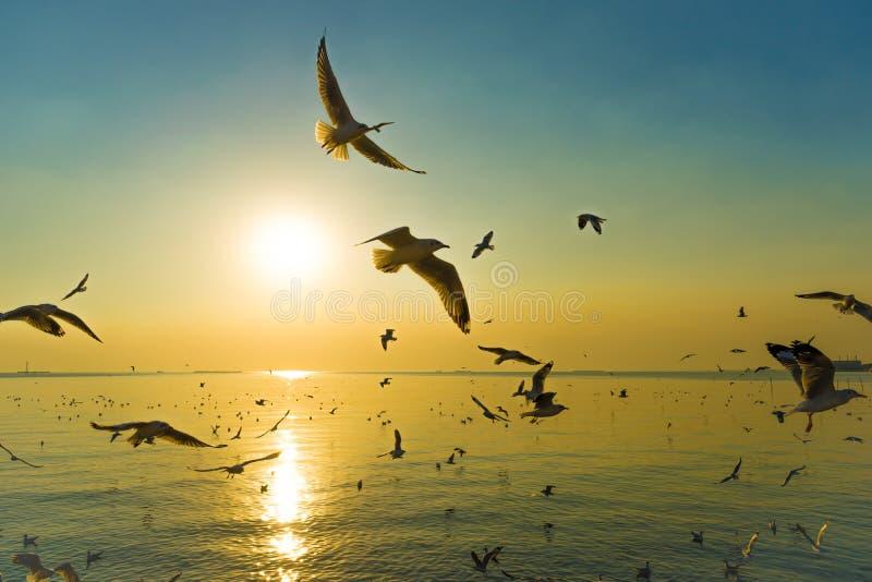 Pássaros migratórios das gaivotas foto de stock