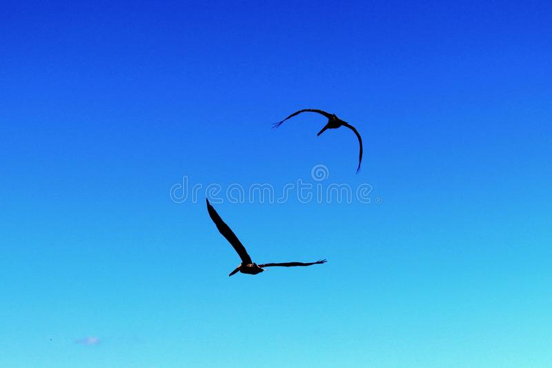 Pássaros mostrados em silhueta fotos de stock royalty free