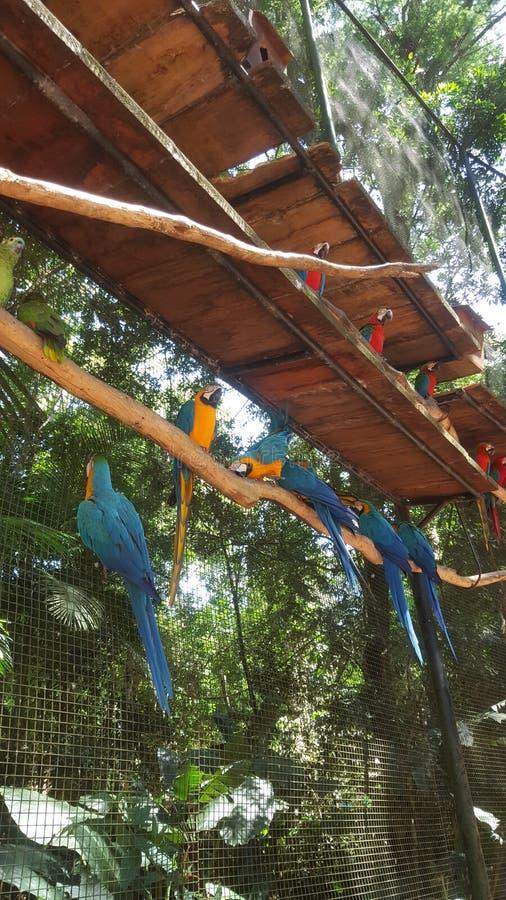 Pássaros multicoloridos imagem de stock royalty free