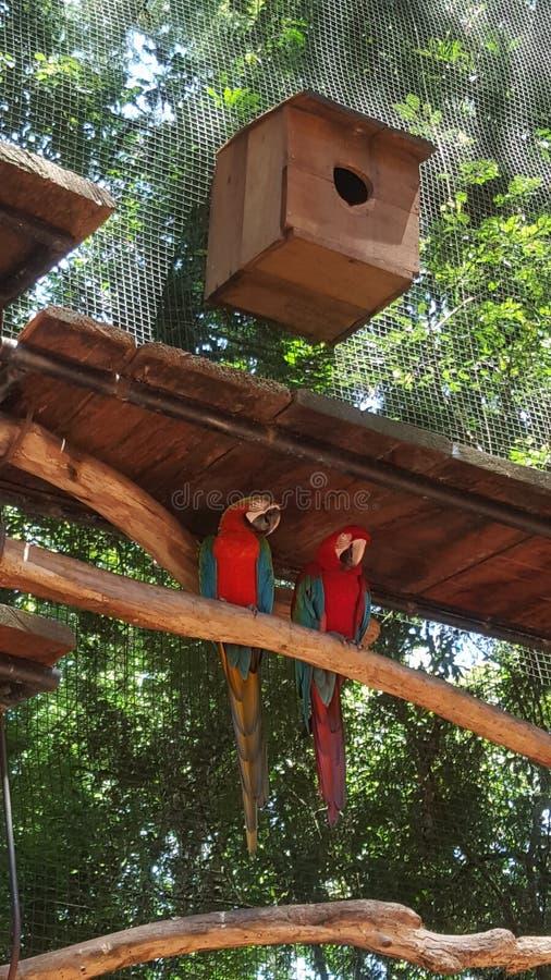 Pássaros multicoloridos fotos de stock royalty free