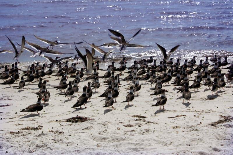 Pássaros na costa do golfo fotos de stock