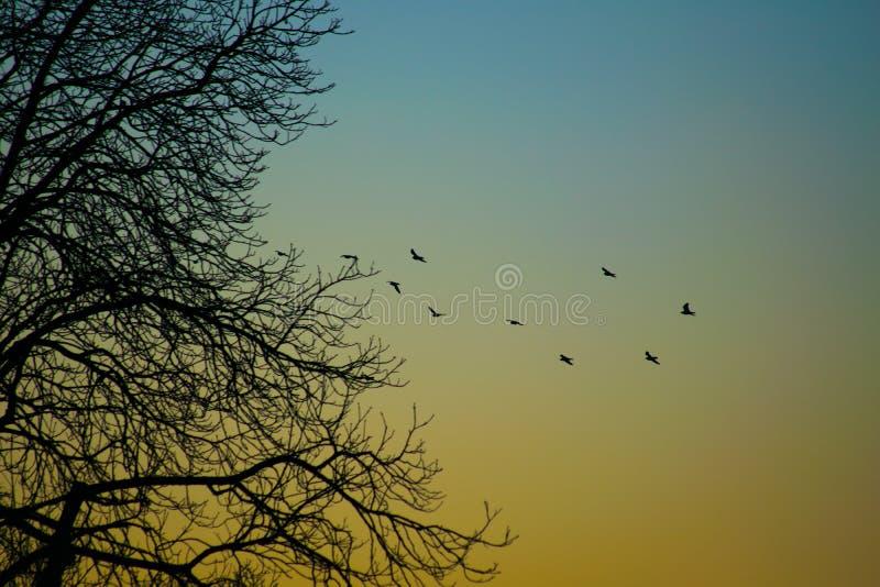 Pássaros na formação fotografia de stock royalty free