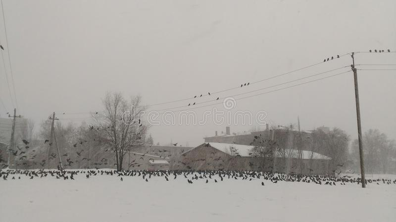 Pássaros na neve imagens de stock royalty free