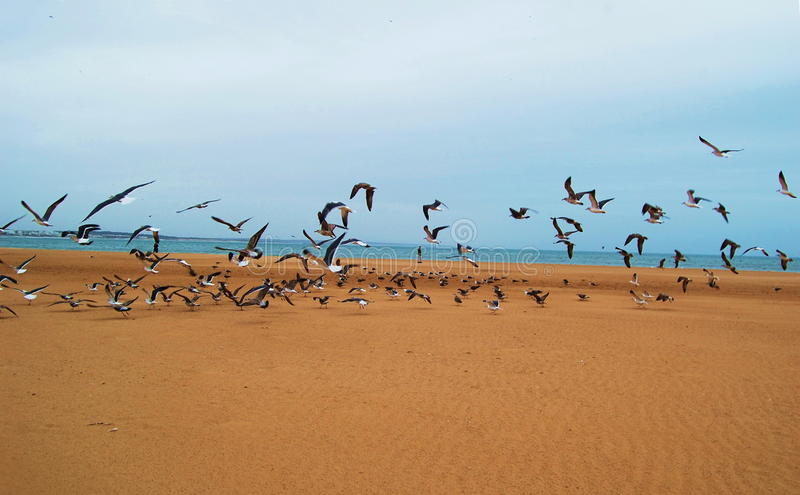 Pássaros na praia fotografia de stock royalty free