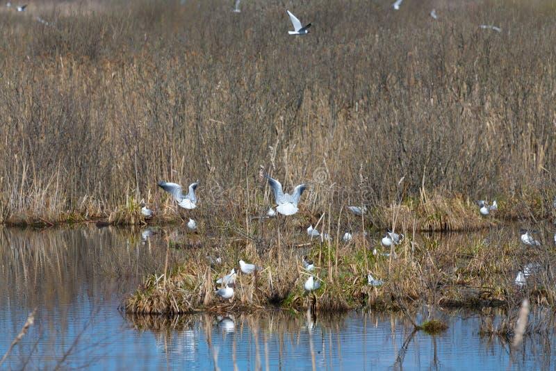 Pássaros na superfície da água do lago imagens de stock royalty free