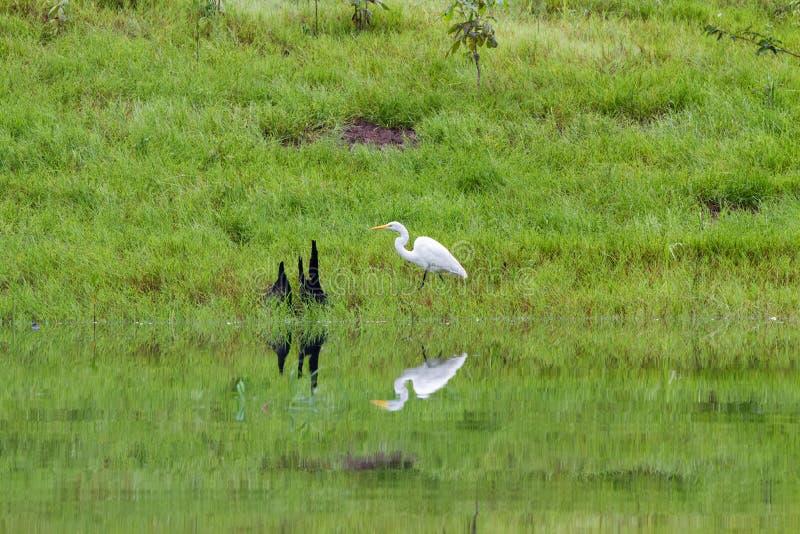 Pássaros nas Amazonas fotos de stock royalty free