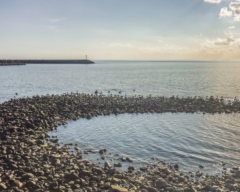 Pássaros nas rochas imagens de stock