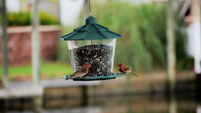 Pássaros no alimentador imagens de stock royalty free