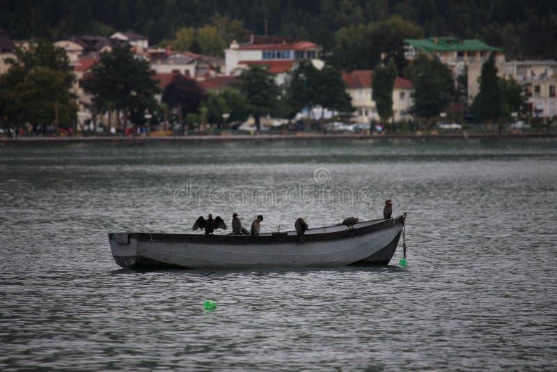 Pássaros no barco de enfileiramento no lago do ohrid foto de stock