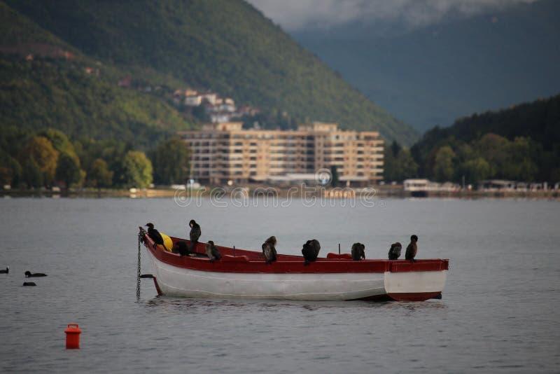 Pássaros no barco de enfileiramento no lago do ohrid imagens de stock royalty free