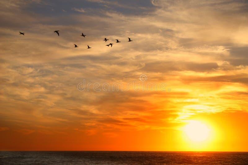 Pássaros no céu foto de stock