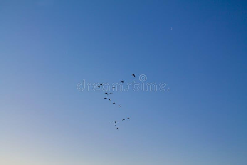 Pássaros no céu fotografia de stock