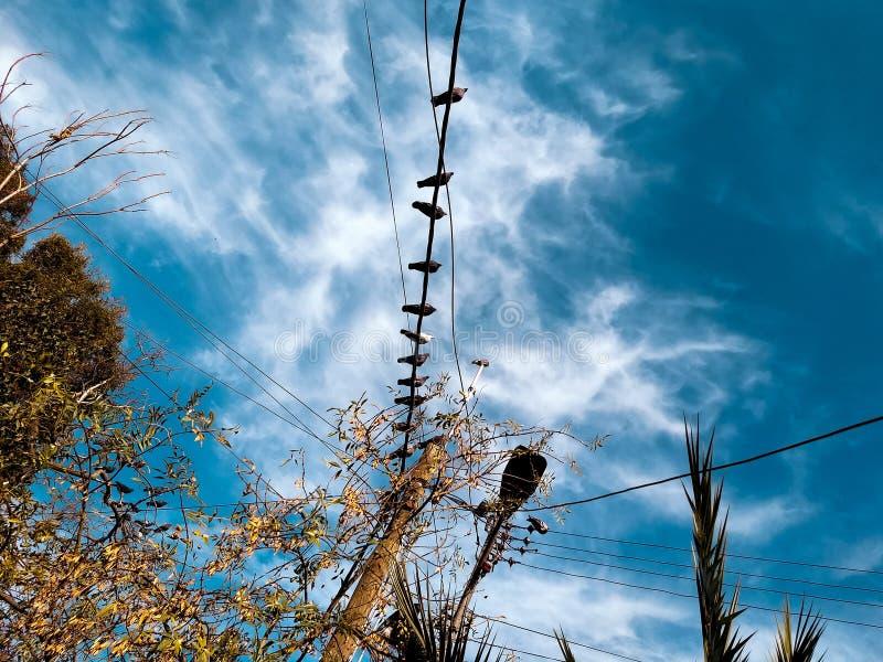 Pássaros no céu do oceano foto de stock royalty free