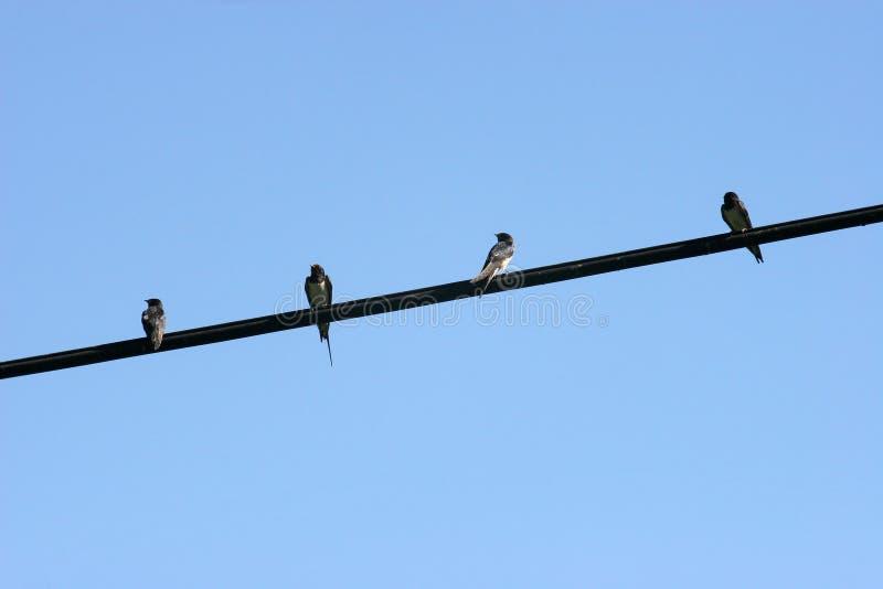Pássaros no fio fotografia de stock