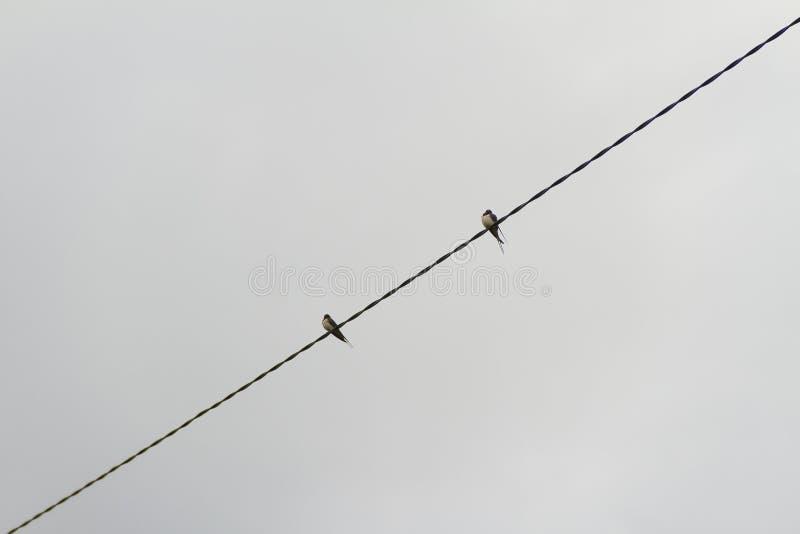 Pássaros no fio imagens de stock