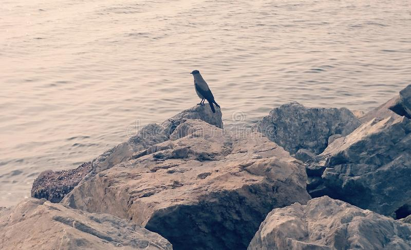 Pássaros no litoral e nas pedras imagens de stock