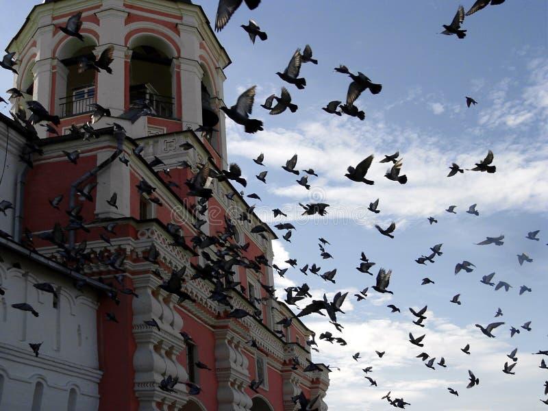 Pássaros no monastério de Danilov fotografia de stock royalty free