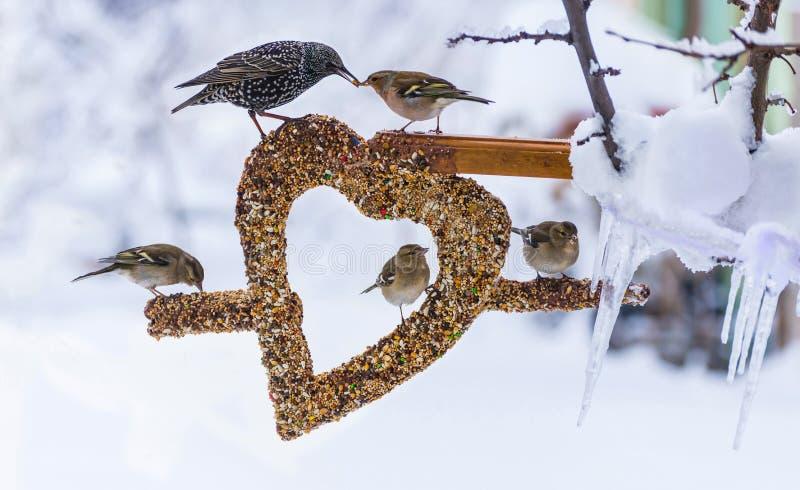 Pássaros no ornamento do coração da semente no inverno imagens de stock