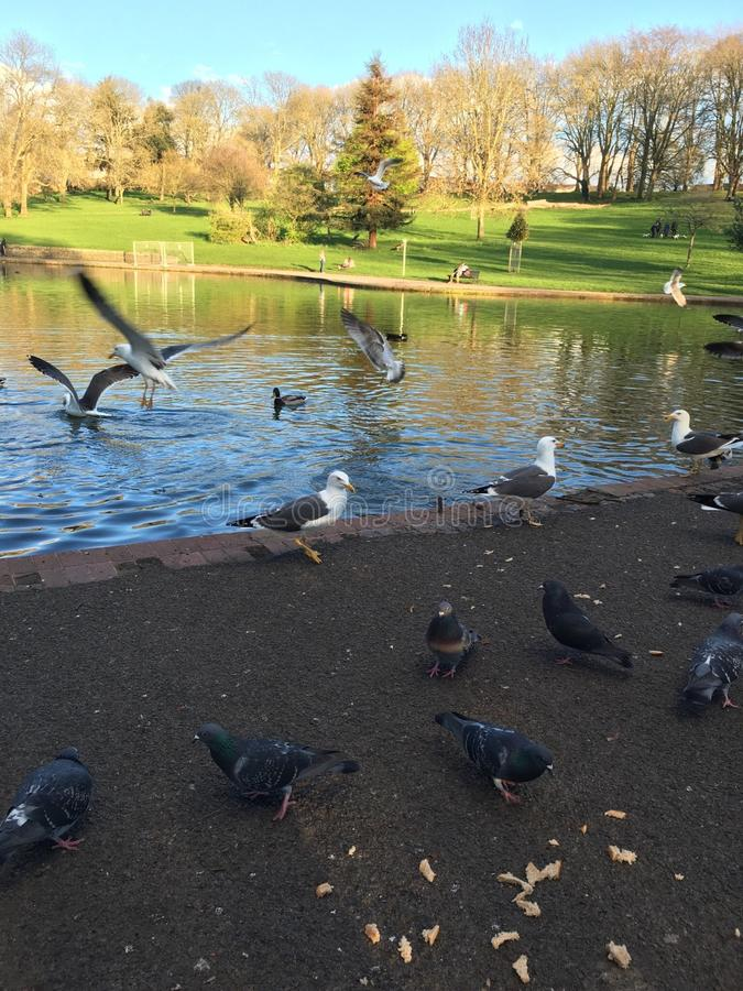 Pássaros no parque imagem de stock royalty free