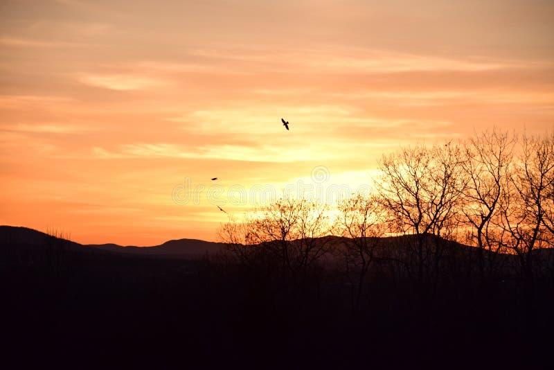 Pássaros no por do sol fotos de stock royalty free