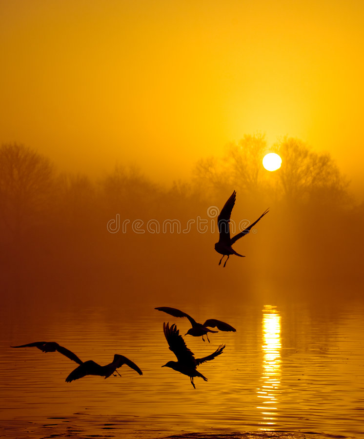 Pássaros no por do sol foto de stock royalty free