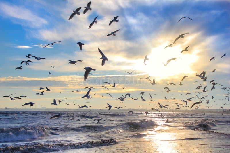 Pássaros no sol contra o céu e o mar imagem de stock