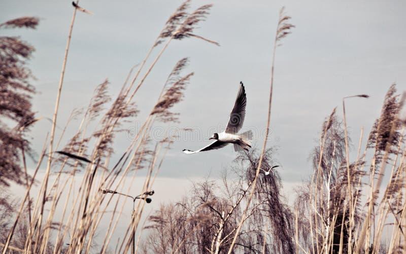 Pássaros no vento imagem de stock