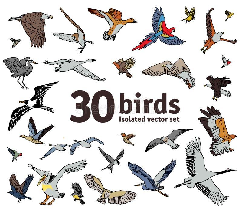 Pássaros objetos isolados definem Coruja papagaios guindastes ilustração royalty free