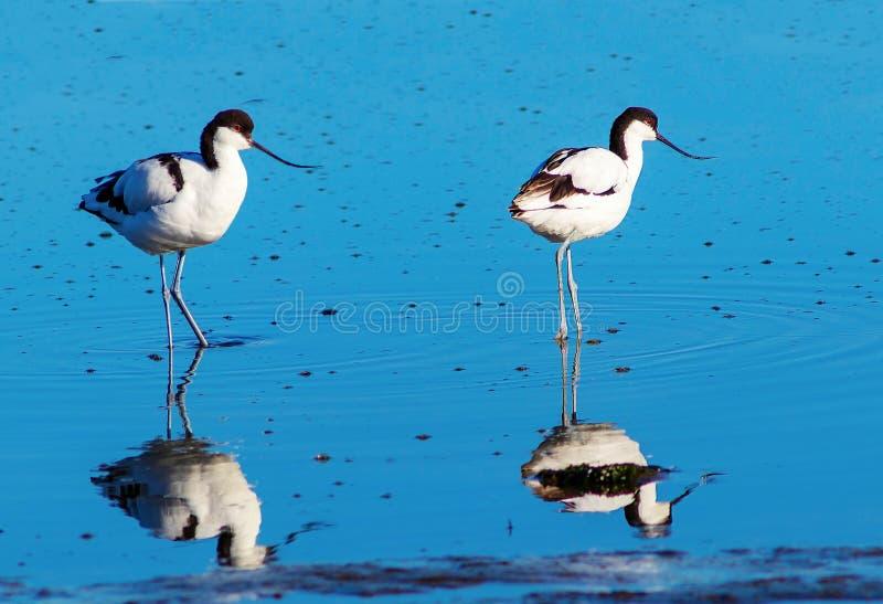 pássaros pequenos no lago azul no dia ensolarado nafta fotos de stock