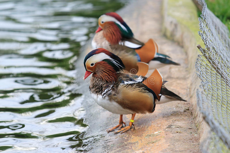 Pássaros perto da água fotos de stock royalty free