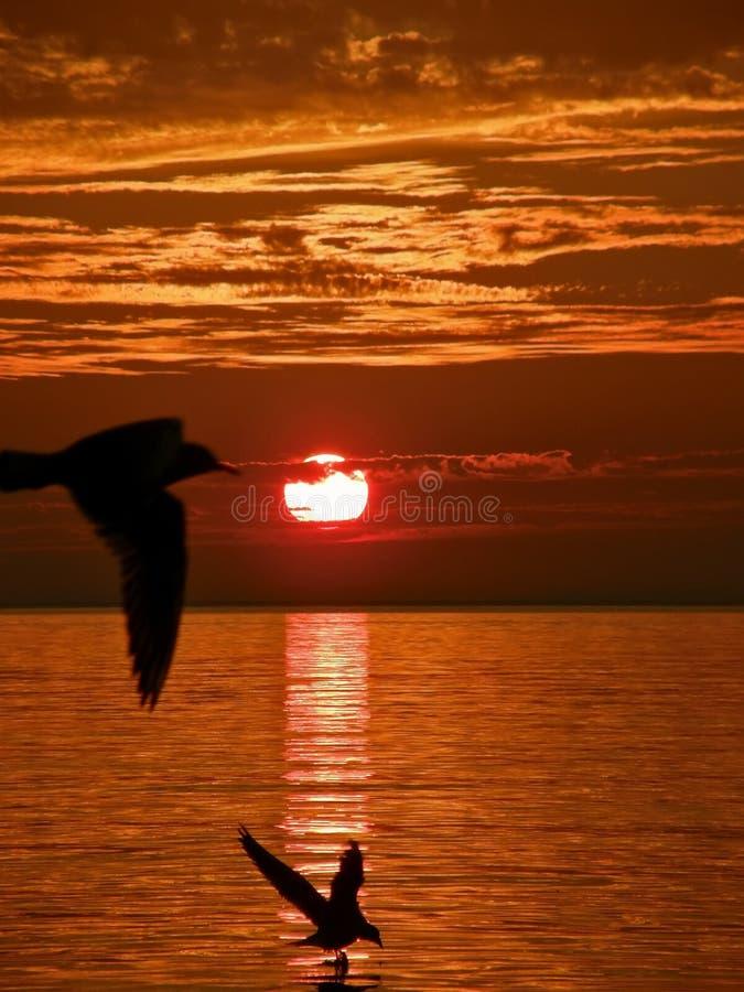 Pássaros, por do sol, mar fotos de stock