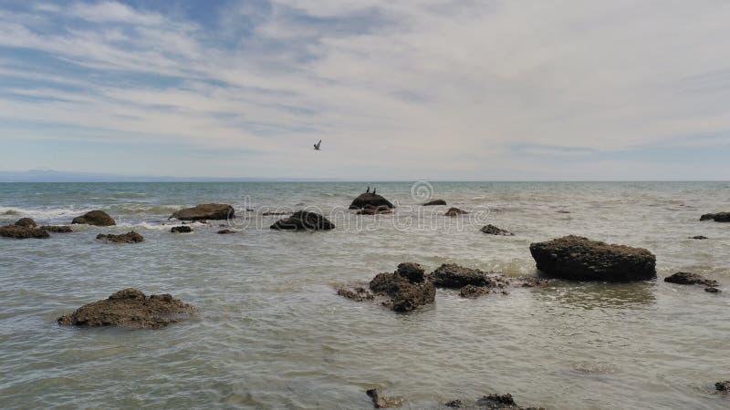 Pássaros pretos nas rochas no mar imagens de stock