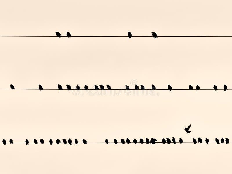 Pássaros pretos no fio foto de stock
