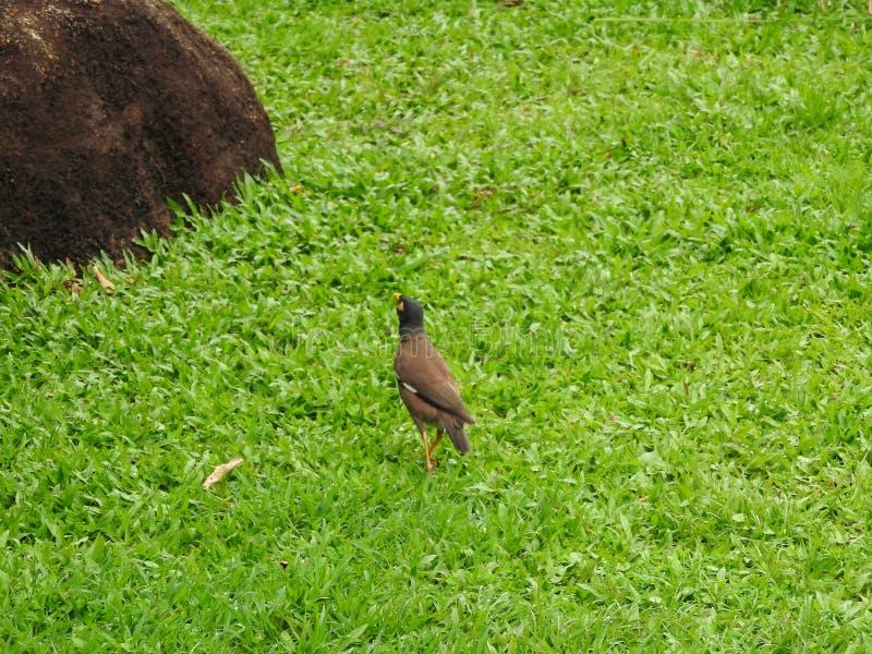 Pássaros que andam no gramado verde sob uma árvore imagens de stock