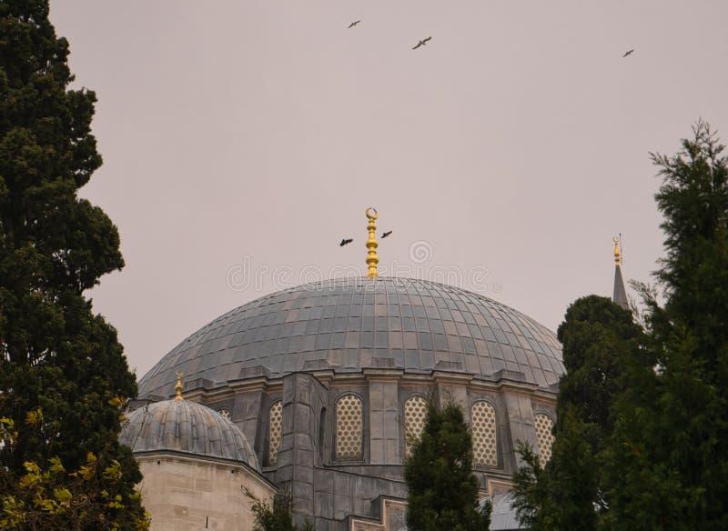 Pássaros que circundam acima da abóbada de uma grande mesquita imagem de stock royalty free