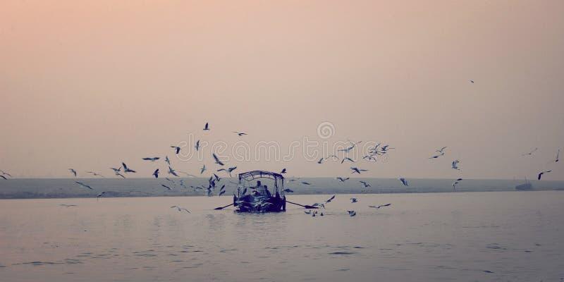 Pássaros que circundam em torno do barco de pesca no efeito do vintage do rio de Ganga fotografia de stock royalty free