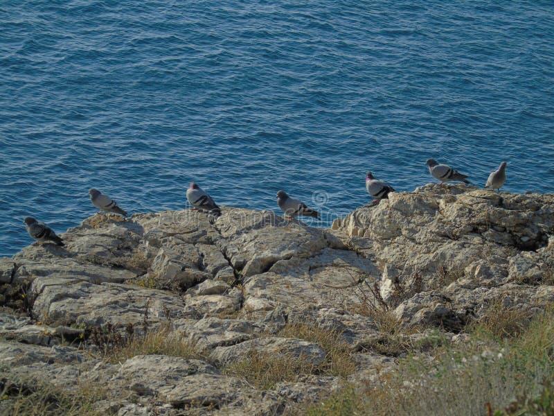 Pássaros que descansam em um penhasco foto de stock