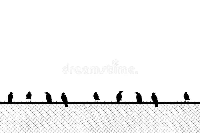 Pássaros que sentam-se na cerca do elo de corrente fotografia de stock royalty free