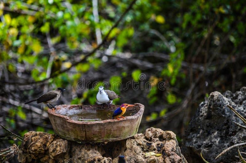 Pássaros que tomam um banho imagens de stock