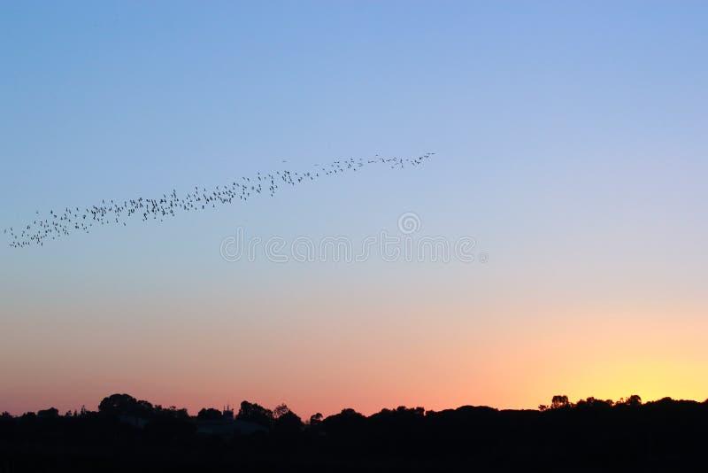 Pássaros que voam acima do lago no por do sol fotografia de stock